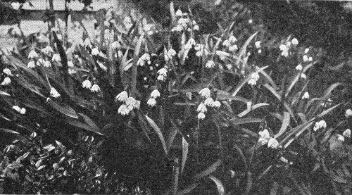 Spring Snowflake  i101_large